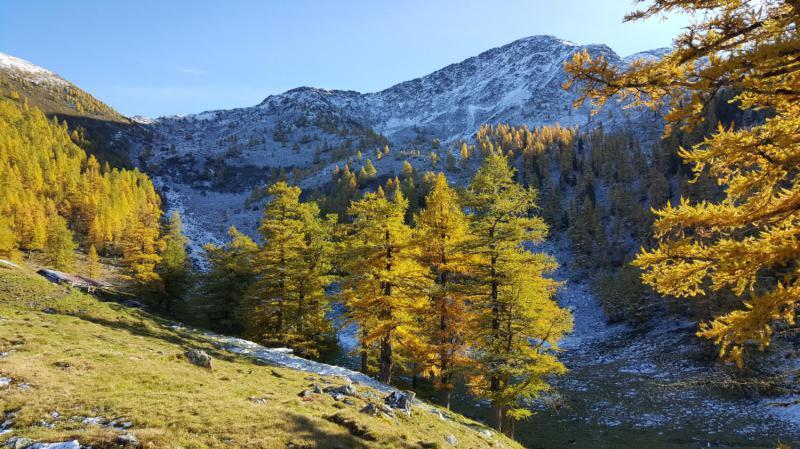 Alpage sous Bovine
